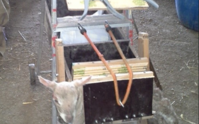 Homemade lamb station