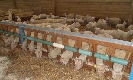 A barrier to prevent lambs from jumping in the trough