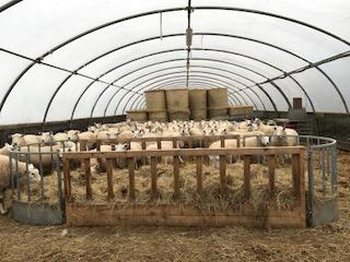 Extended feeders