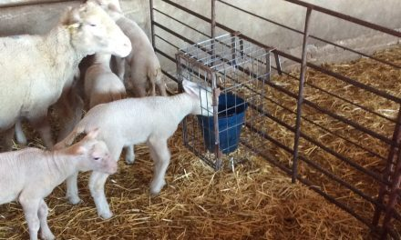 Cage to provide water to lambs