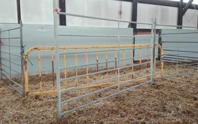 Barrier to restrict the access of the lambs to their mothers