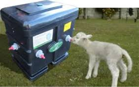 Artificial rearing of lambs