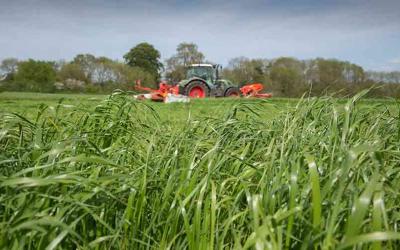Effetto del valore nutritivo dell'insilato d'erba sui fabbisogni di concentrato in tarda gravidanza