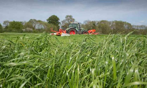 Effet de la valeur nutritive de l'ensilage d'herbe sur les besoins en concentré en fin de gestation