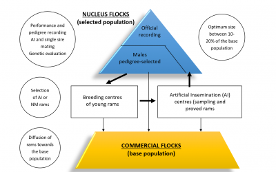 Schema di selezione per i caratteri produttivi e riproduttivi
