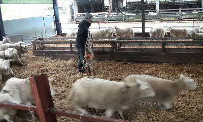 Izolarea oilor cu poarta