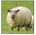 Metabolic diseases in pregnant ewes