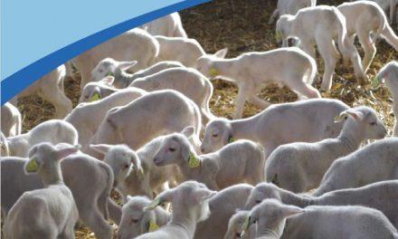 Sheep shed (air circulation, bedding, hygiene etc.)