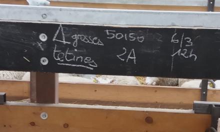 Blackboard for lambing pens