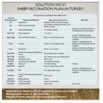 Calendar pentru vaccinarea ovinelor