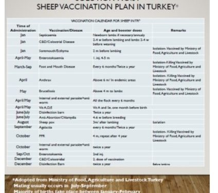 Vaccination Calendar for Sheep