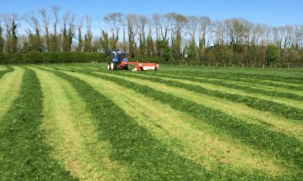 Producing high feed value silage