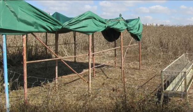 Hand made shade shed for rams