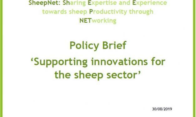 Supportare le innovazioni per il settore ovino