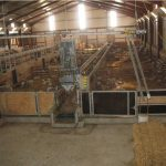 Organisation of the lambing shed in small batches