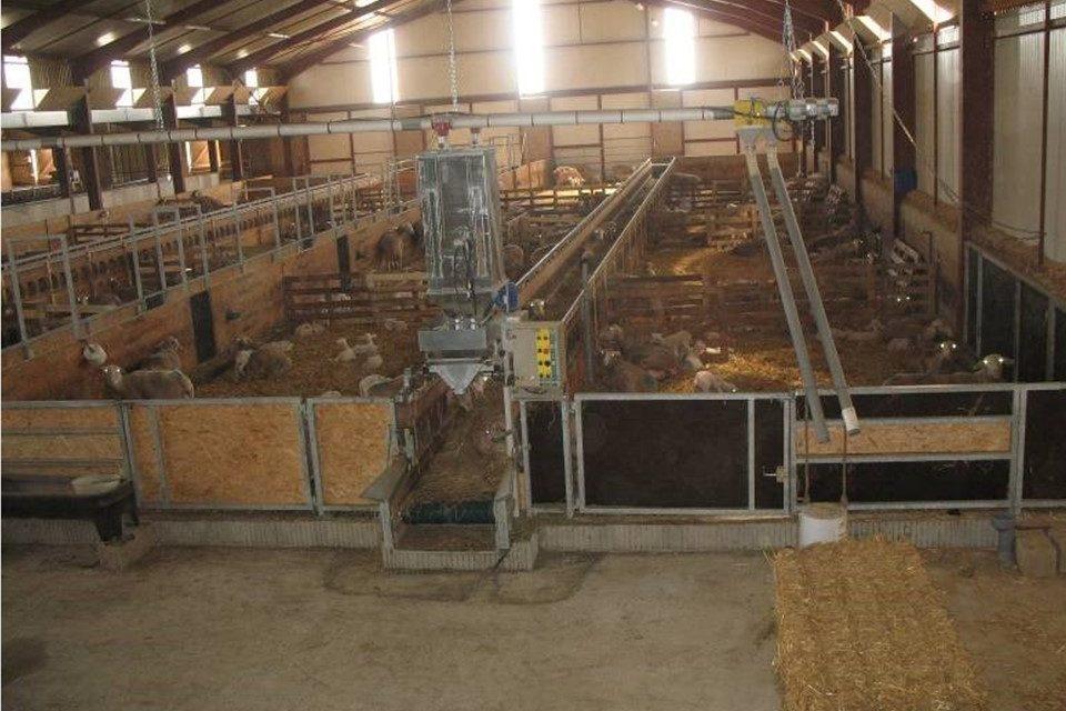Photo period manipulation of estrus in ewes