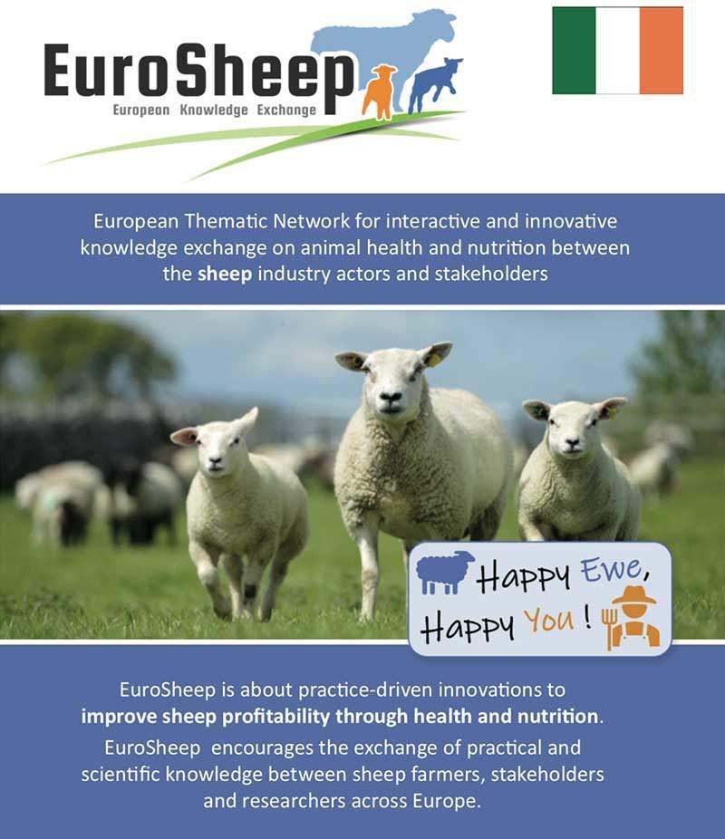 Eurosheep Network Flyer - Irish